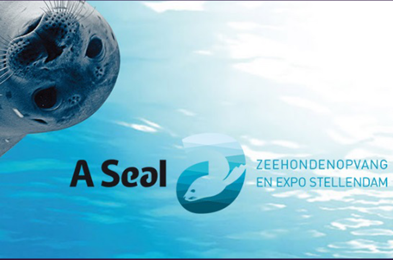 Afbeelding van A Seal