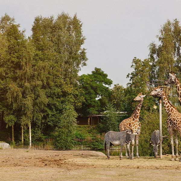 Product afbeelding: Safaripark Beekse Bergen