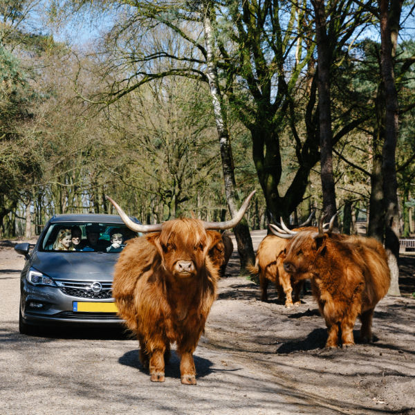 Safaripark Beekse Bergen Hilvarenbeek