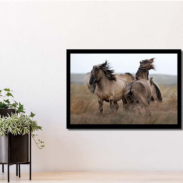 Product afbeelding: Fotoprint Konikpaarden op Texel
