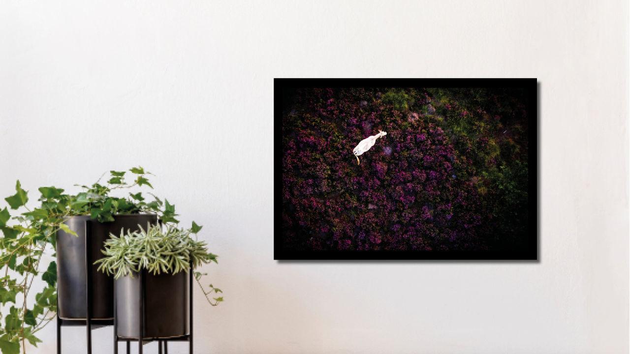 Product afbeelding: Fotoprint Koe op de heide