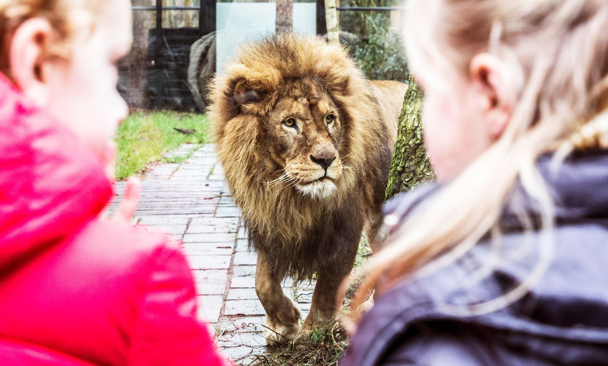 Afbeelding van DierenPark Amersfoort