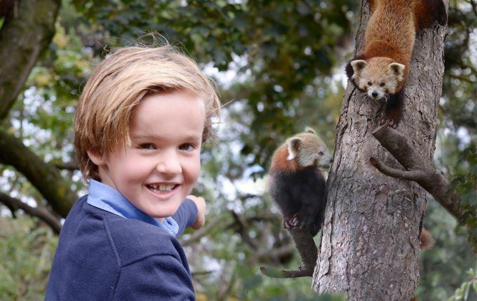 Afbeelding van Vogelpark Avifauna