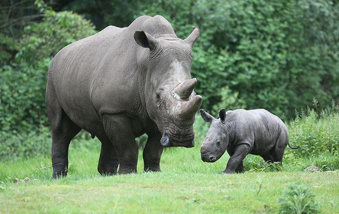 Afbeelding van Burgers' Zoo
